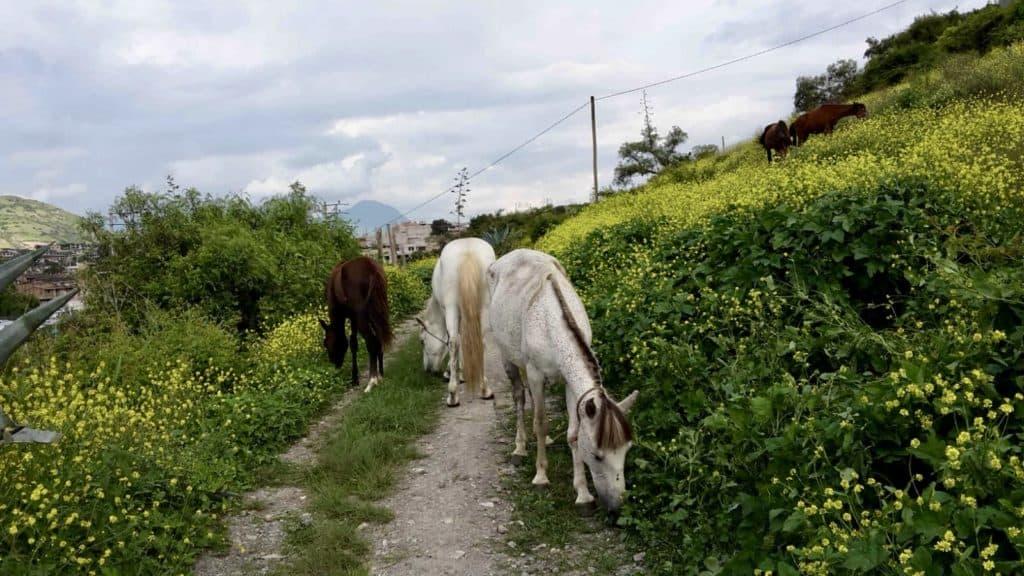 Auf Jannas Arbeitsweg zum Krankenhaus schauen auch mal Pferde vorbei.