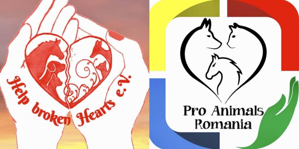 Von Hannover bis nach Rumänien – die Asociatia Pro Animals ist über Grenzen vernetzt.