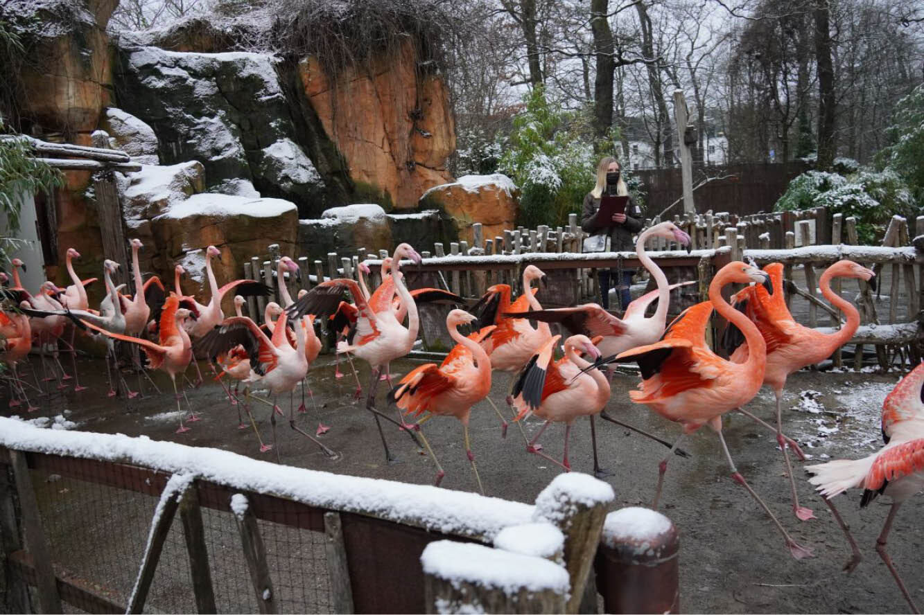 "Featured image for ""Große Inventur im Erlebnis-Zoo Hannover"""
