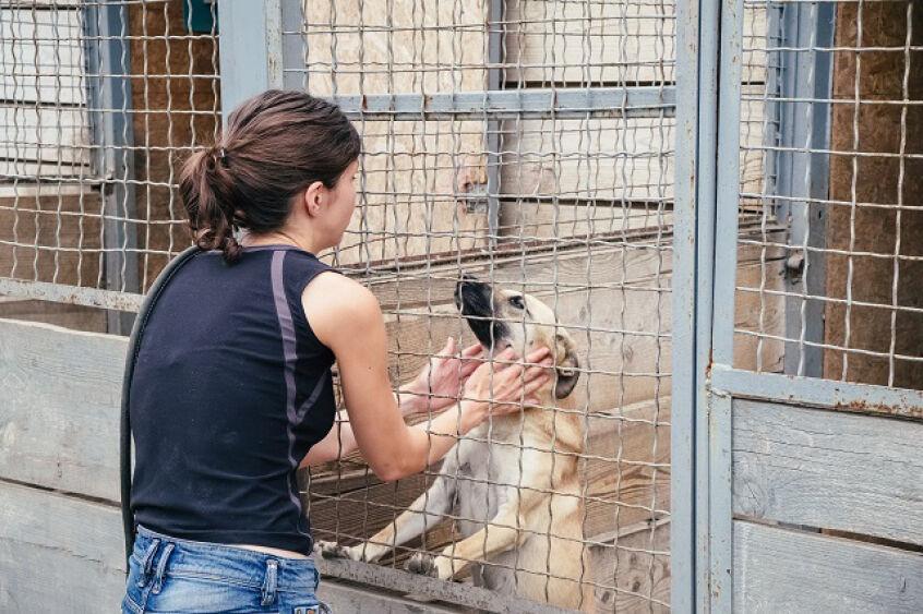 """Featured image for """"Die Suche nach einem Zuhause: Tierheime in der Corona-Krise"""""""