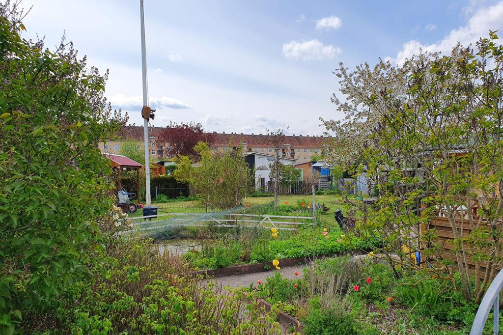 Der Kleingarten von Walkowiak.