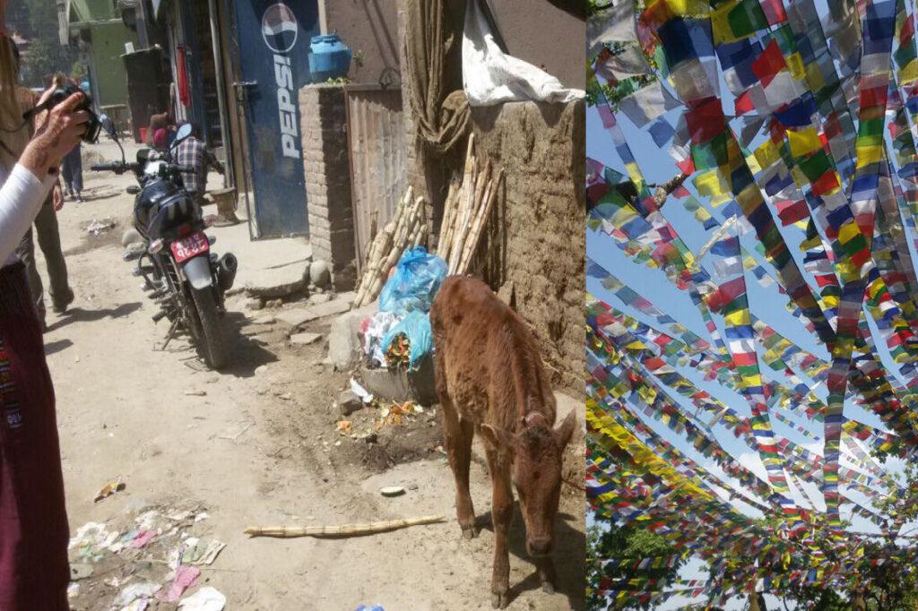 Links: Nina fotografiert Kühe. Rechts:Viele bunte Gebetsfahnen.